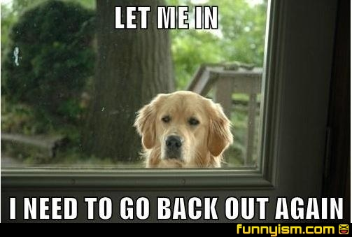 my dogs exactly!