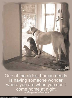 quotes | a place to love dogs