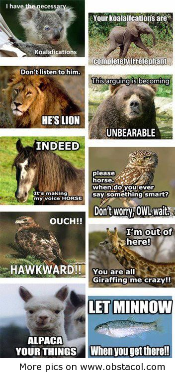 Funny animals sayings