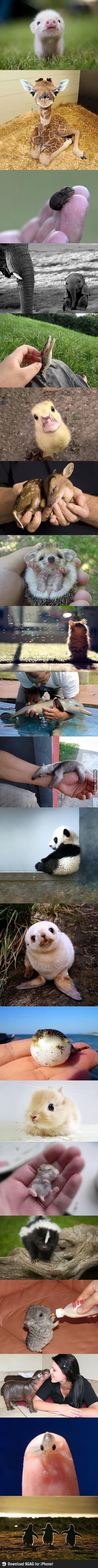Baby Animals!!!!! Soo cute!