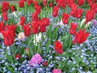 Butchart Gardens b&b