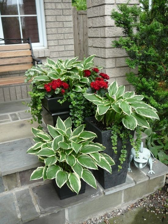 How to Plant Hostas in a Pot