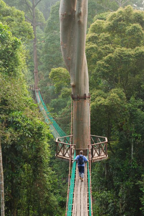 Danum Valley Canopy Walkway, Malaysia  ::  300-meter-long (985 ft) and 27-meter-