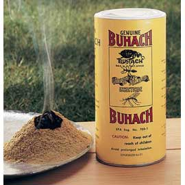 "Buhach Insect Powder Nature's ""secret"" bug repellent — n"