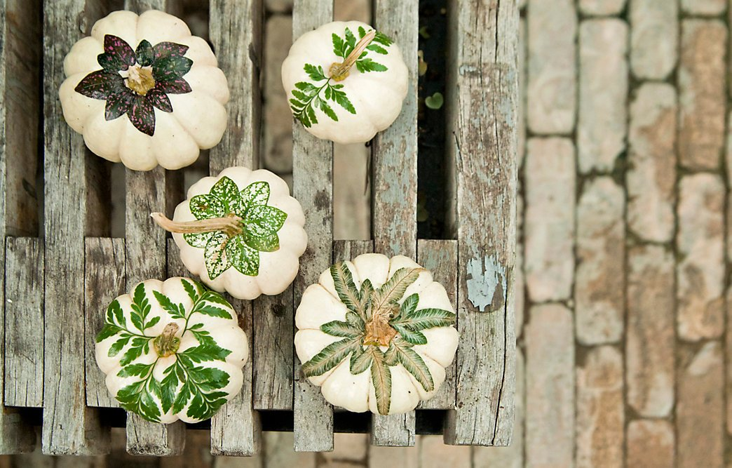 Botanical Pumpkins -   HOME DECORATIONS WITH FALL LEAVES