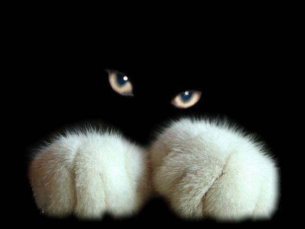 Cute Cats!