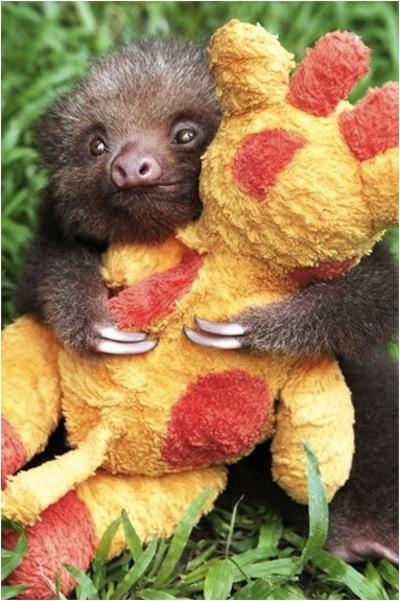 sloth giraffe sloth sloth