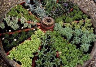 creative herb garden!