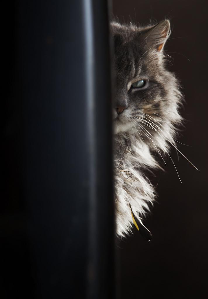 cool cat #cat