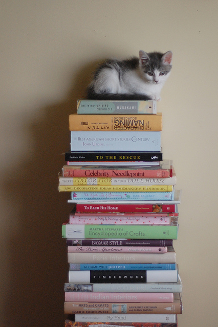 books and a kitten