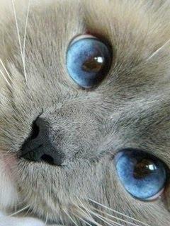 captivating blue eyes