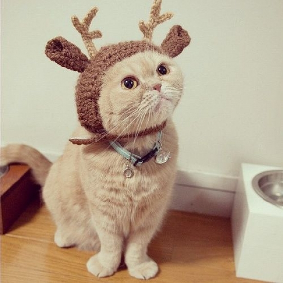 Is Christmas here yet