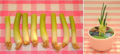 How cheap-replanting green onions, replant root ends …