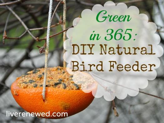 Green in 365: DIY Natural Bird Feeder -   DIY Natural Bird Feeder