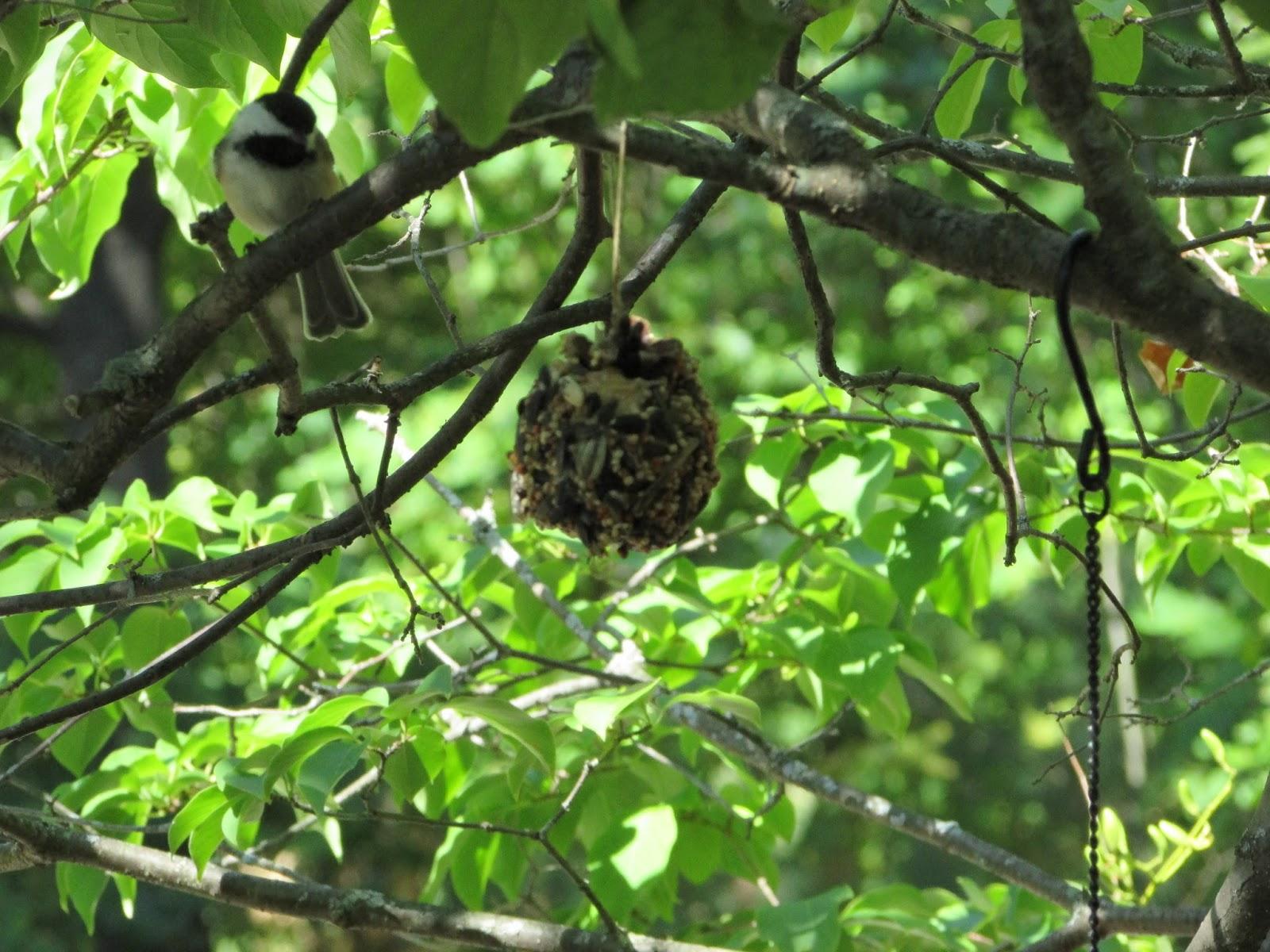 DIY Natural Pine Cone Bird Feeders -   DIY Natural Bird Feeder