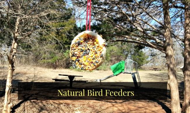 DIY Natural Bird Feeder -   DIY Natural Bird Feeder