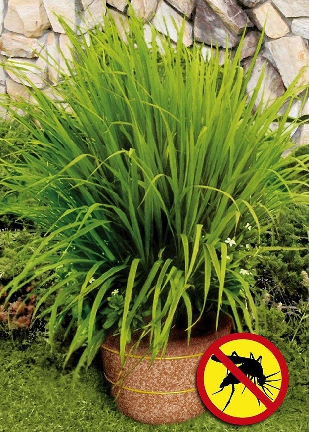 16. Plant lemongrass as a natural way to keep mosquitoes away. -   32 Cheap And Easy Backyard Ideas