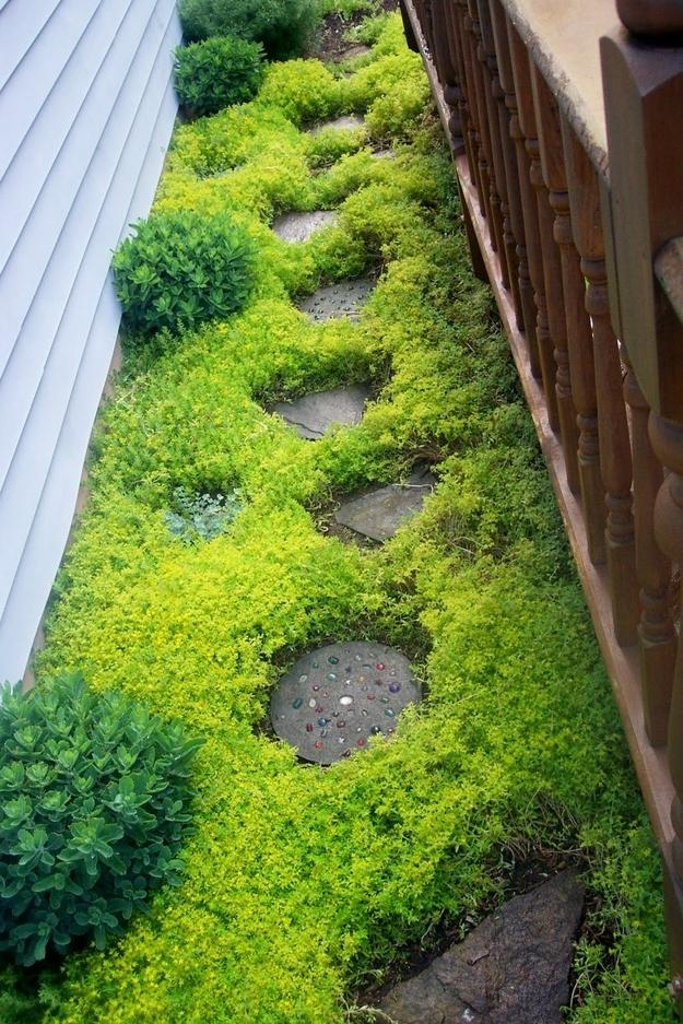 18. The sedum sarmentosum plant makes a fast-growing ground cover. -   32 Cheap And Easy Backyard Ideas