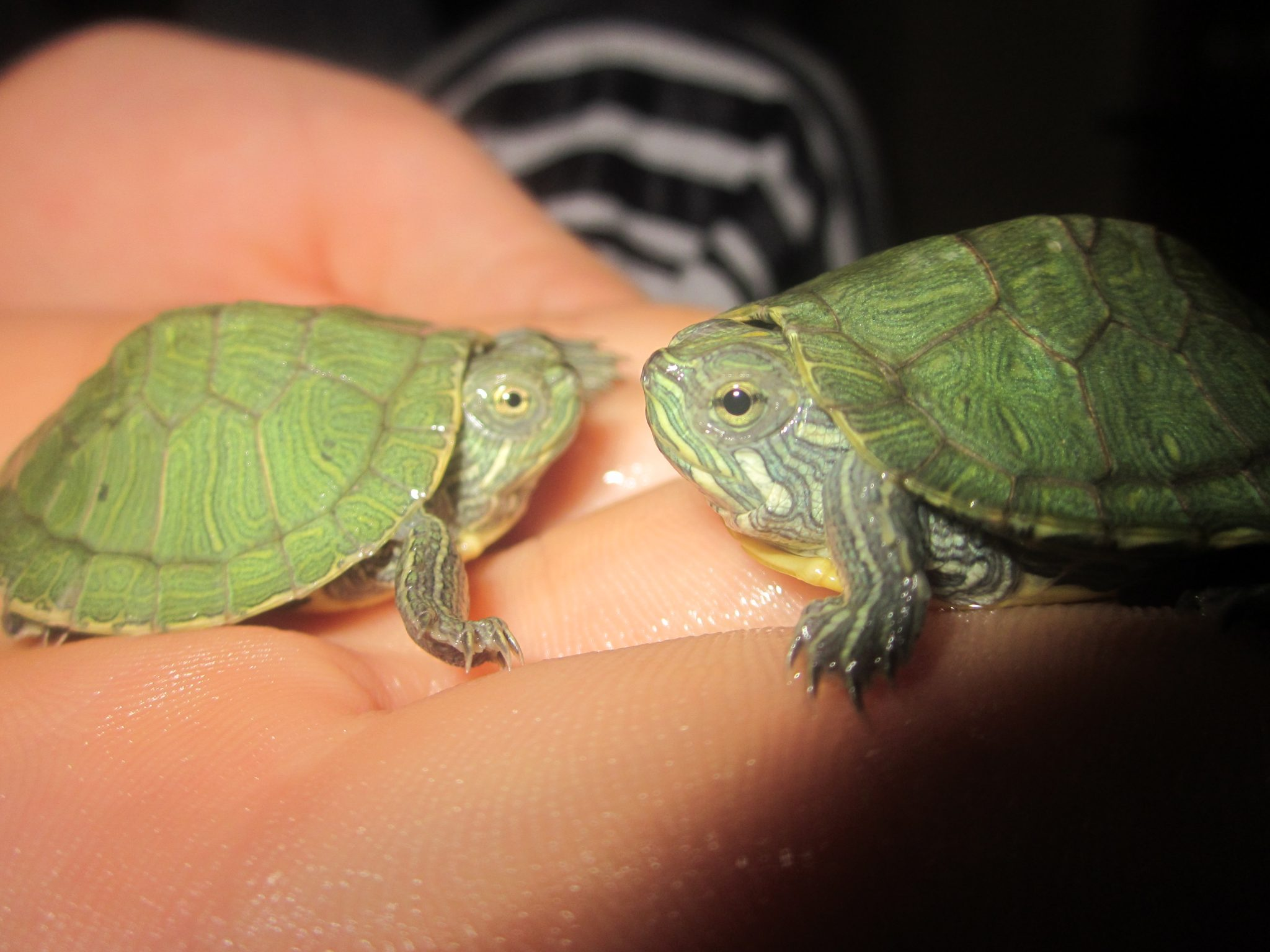 Cute turtle pictures we know how to do it - Cute turtle pics ...