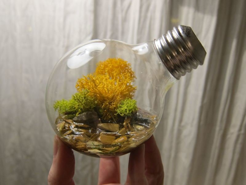 3. Terrariums of light bulbs, decor, interesting, beautiful, with their own hands, an old light bulb, photo