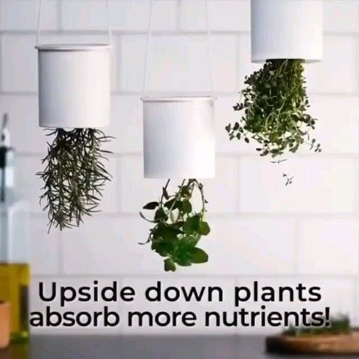 12 plants That Dont Need Sunlight bathroom ideas